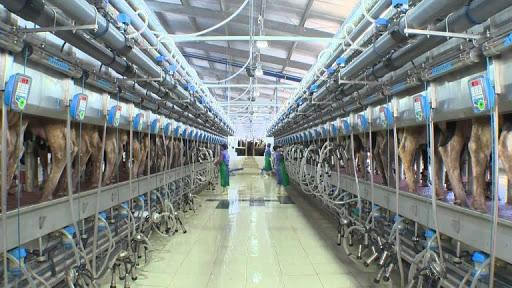 Lắp đặt hệ thống quạt thông gió tại TH Milk